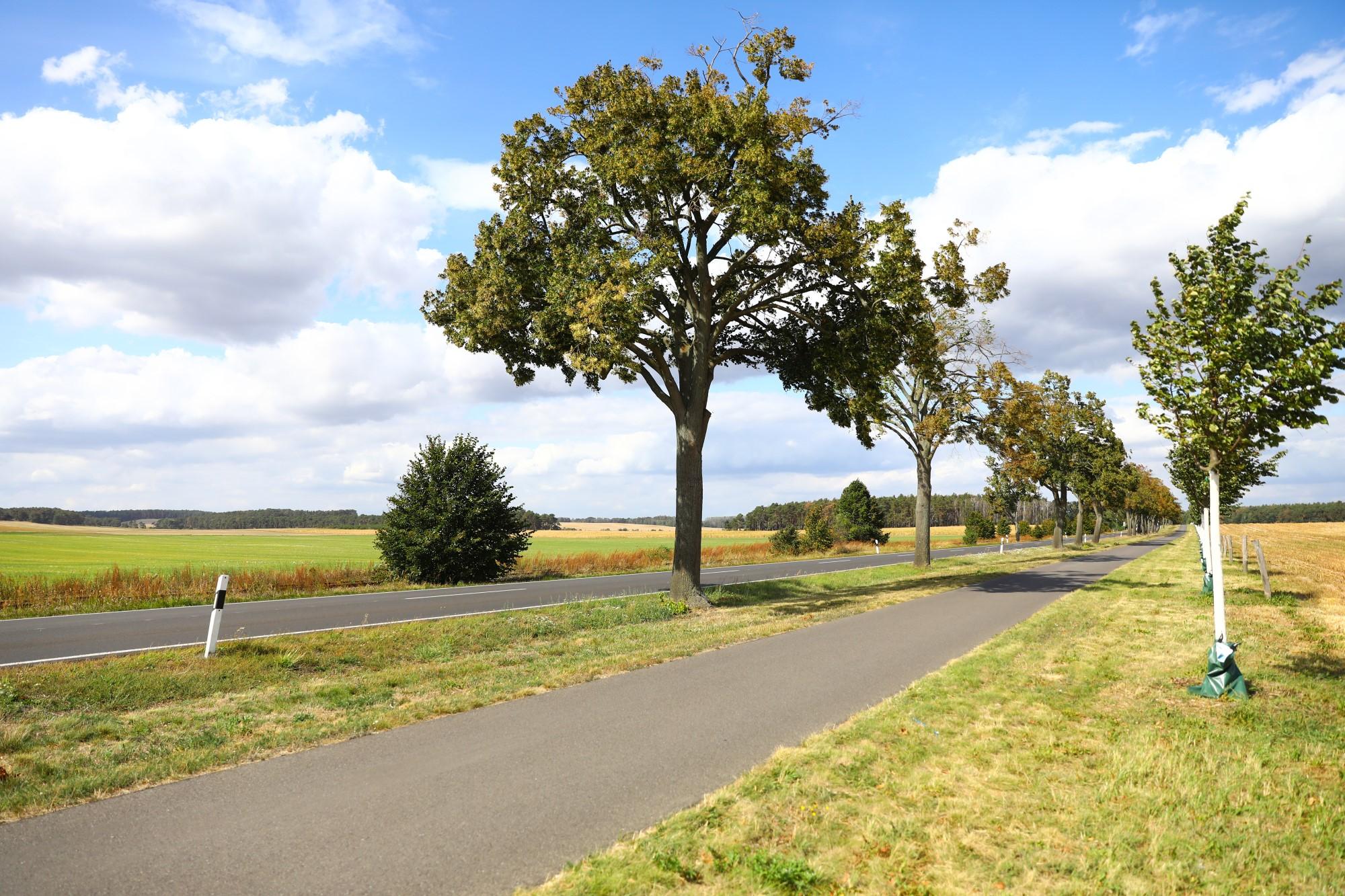 Radwege – Radweg in Bad Belzig